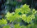 گزارش میزان بارندگی سیریز درچند روز اخیر