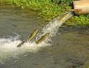 رودخانه آب شور سیریز استعداد شکوفا نشده آبزی پروری