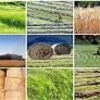 معاون توسعه روستایی خبر داد: پرداخت وام ۷۵۰ میلیونی با کارمزد ۳ درصد به تعاونیهای روستایی