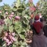 زلزله شدید در باغهای پسته کرمان
